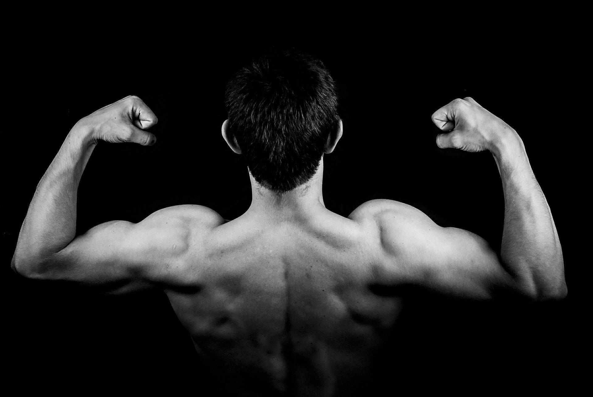 rameur-muscles